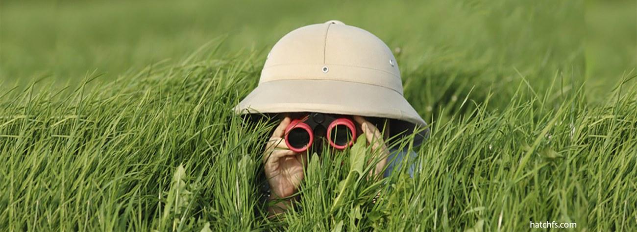 spying_grass