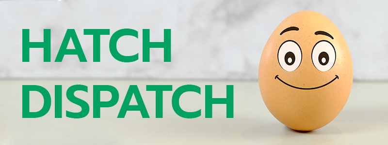 hatch dispatch newsletter mortgage broker
